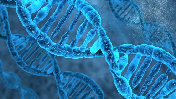 Gene therapy is just one strand of research into treating muscular dystrophy.