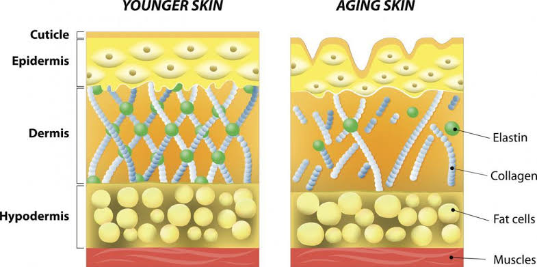 Collagen according to age