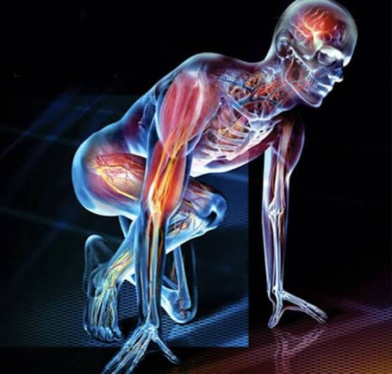 Physiology covers a multitude of disciplines within human biology and beyond.