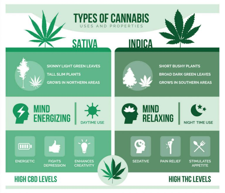 Indica and sativa: What are the key difference?